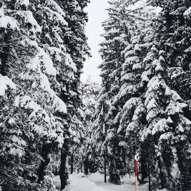 Walking through the winterwonderland  winterwonderland snow forrest trees treelinehellip