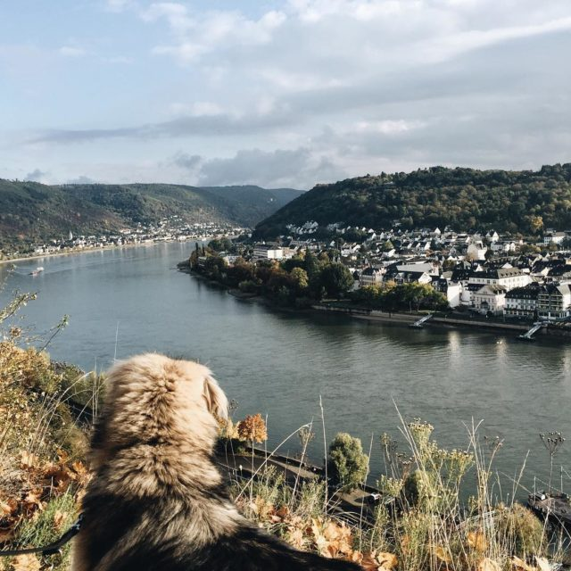 Albert also enjoyed the view all over the Rhine viewhellip
