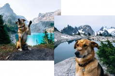 travelwithdogs_1