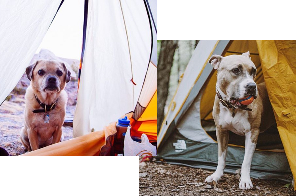 campingwithdogs