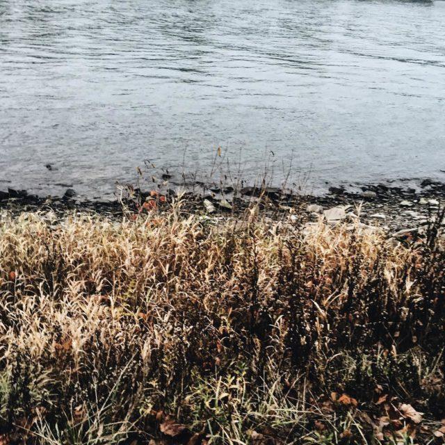Morning walk with Albert next to the Rhine Still autumnhellip