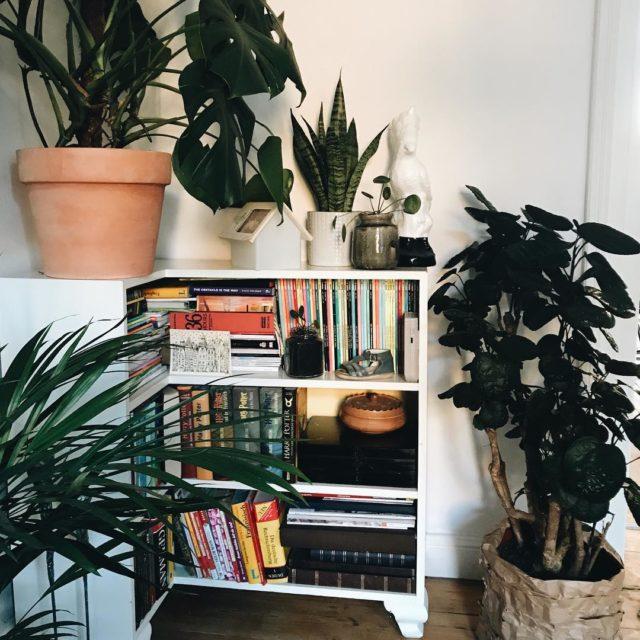 Eine kleine Dschungel Ecke im Wohnzimmer Die Monstera wchst undhellip