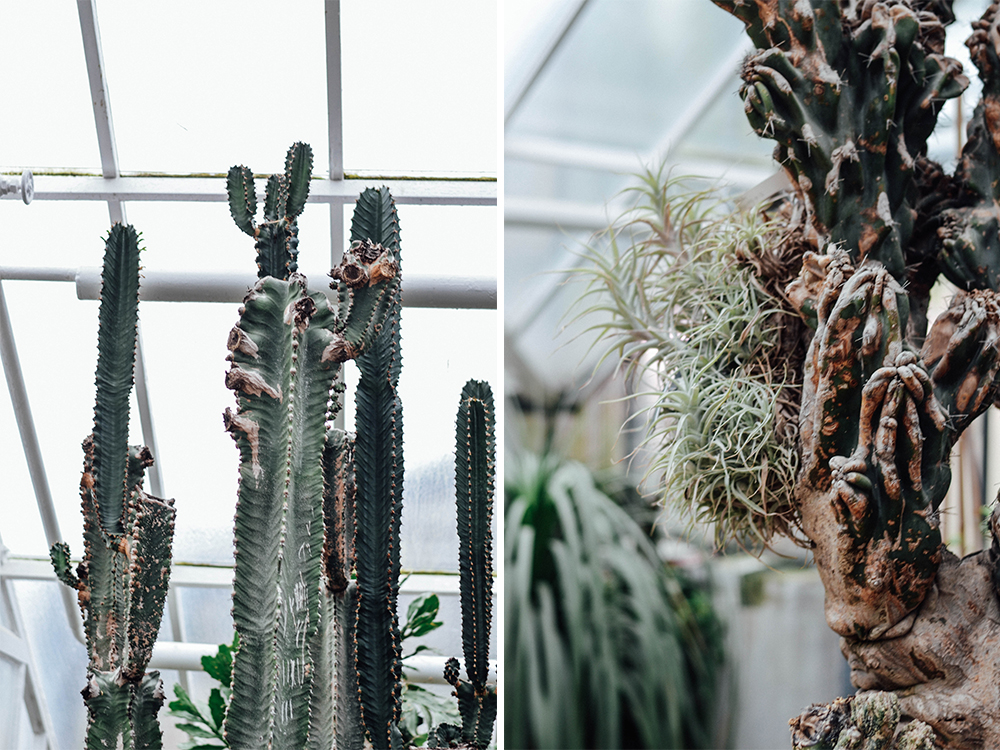 Kakteen Kaktus Cactus Botanischer Garten