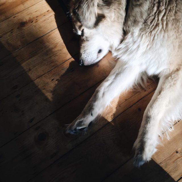 Da ist jemand noch ziemlich mde schon anstrengend ein Hundhellip