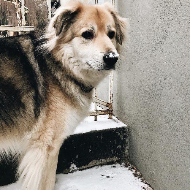 Albert liebt den Schnee! Da kann die Tre zum Gartenhellip