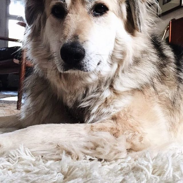 Loooooooove  Albert albertthedog dogs dogsofinsta instadog petsagram pet instadogshellip