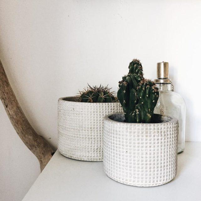 Hi friends! Es sind einige neue Grnlinge eingezogen cactus plantshellip