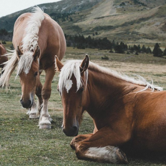 Wild beauties everywhere in the french Pyrenees pyrenees horse wildlifehellip