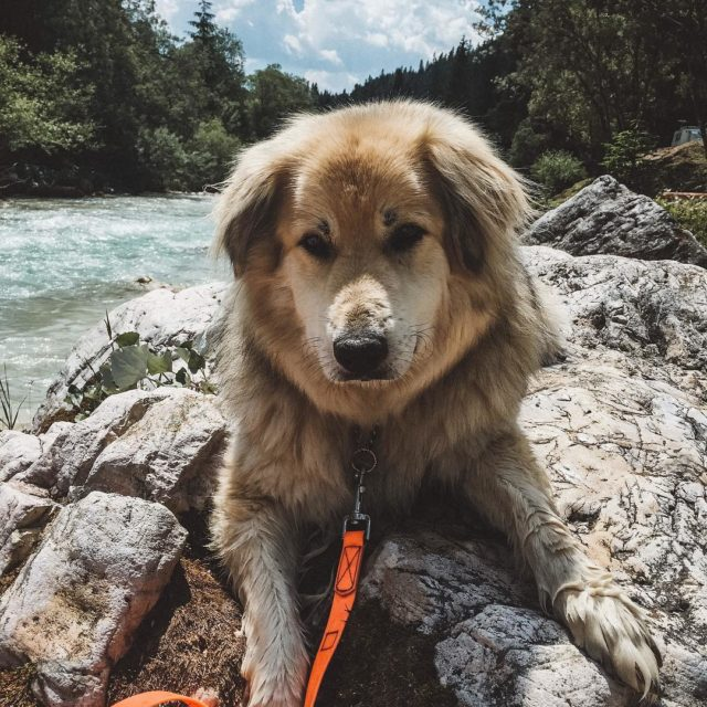 Hiking and swimming in the Dolomites albertsadventures hikingdogsofinsta campingwithdogs dogsofinstagram