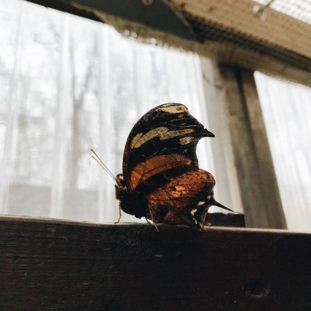 Hach wie gern htte ich meinen eigenen kleinen Schmetterlingsgarten butterflygardenhellip
