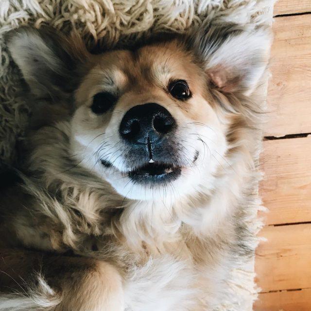 Albert in Die Fledermaus hhh Der Flederhund  albertthedog alberthellip