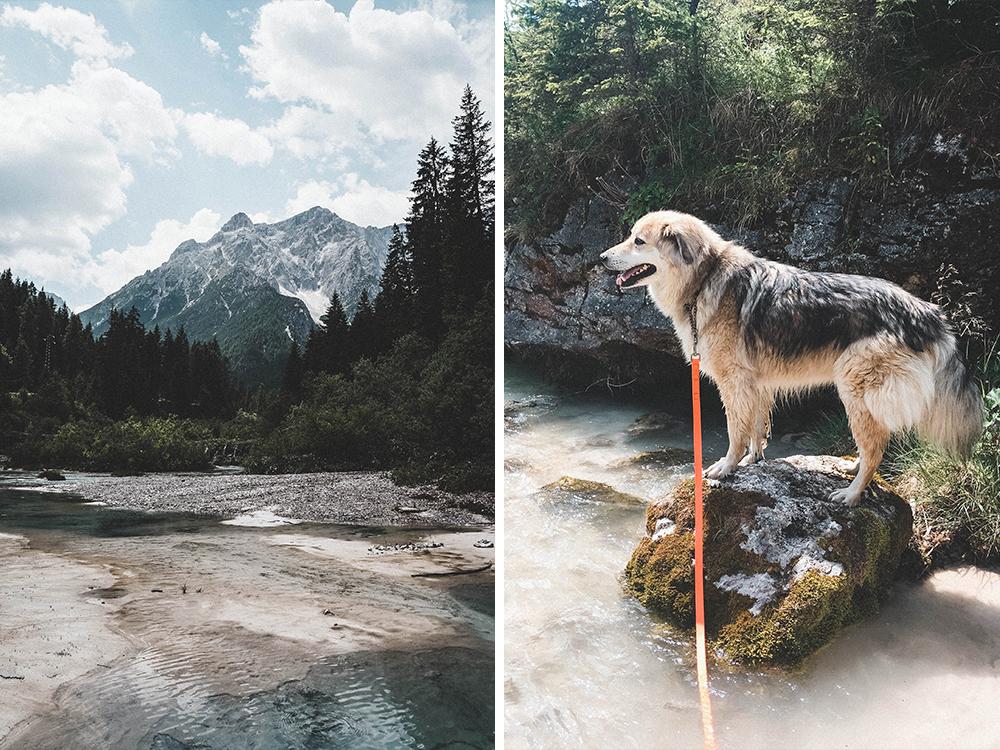 dolomiten-suedtirol-urlaub-mit-hund-italien