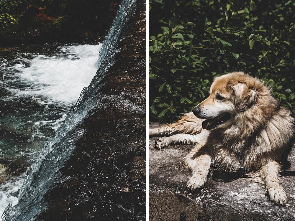 dolomiten-urlaub-mit-hund-camping-suedtirol-italien-wandern