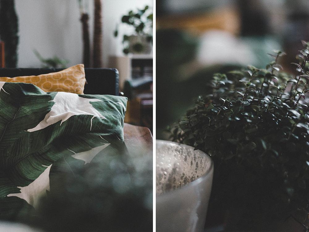 zimmerpflanzen-interiorblogger-wohnzimmer-Urban Jungle-kakten-kanonierblume