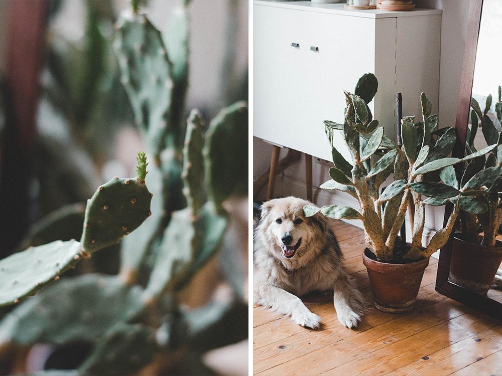 zimmerpflanzen-opuntie-feigenkaktus-pflanze-kakteen Urban Jungle
