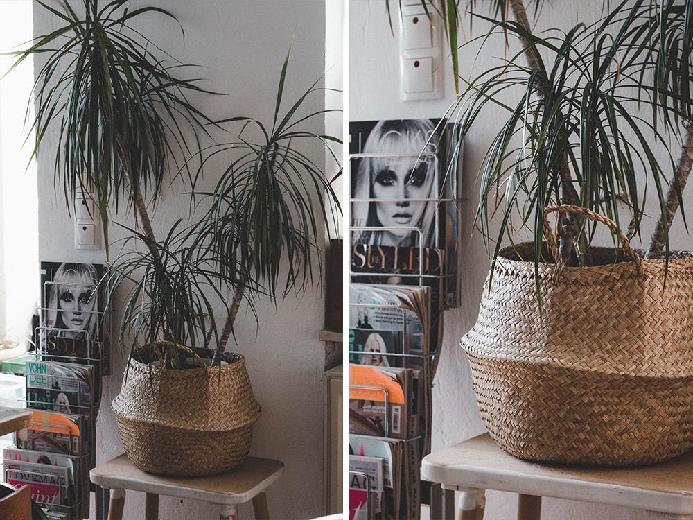 zimmerpflanzen-palme-korb-pflanze-kakten-kanonierblume