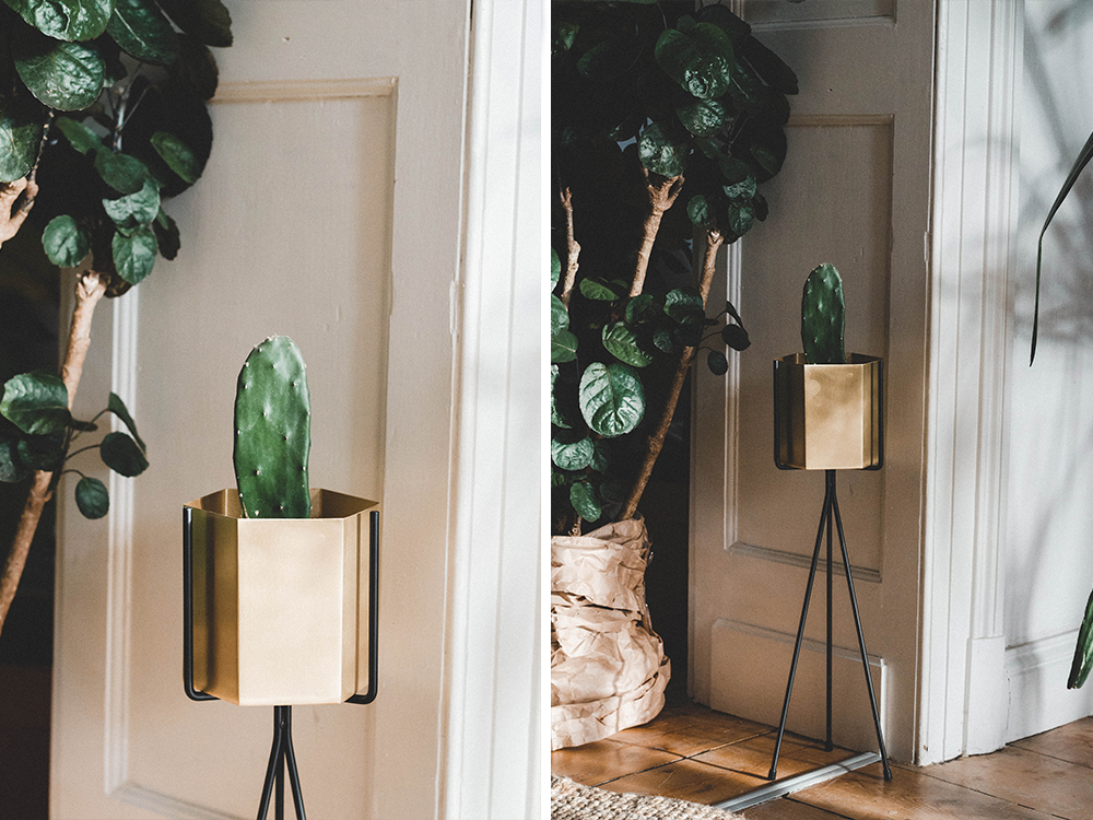 zimmerpflanzen-pflanzstaender-Urban jungle-uebertopf-pflanze-kakteen-kaktus