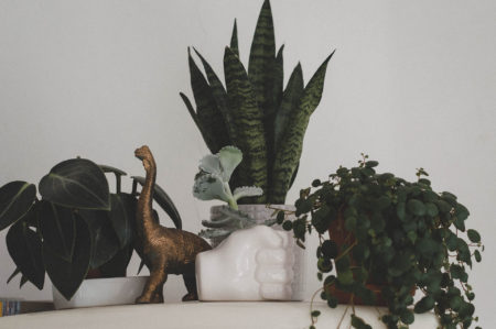 zimmerpflanzen-sukkulenten-pilea-monstera-bogenhanf-pflanze-kaktus